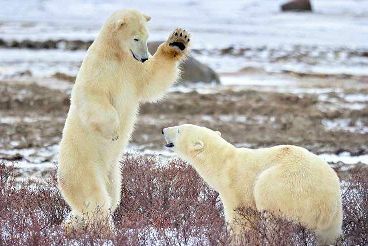 Крупнейший заповедник в Евразии – Большой арктический заповедник