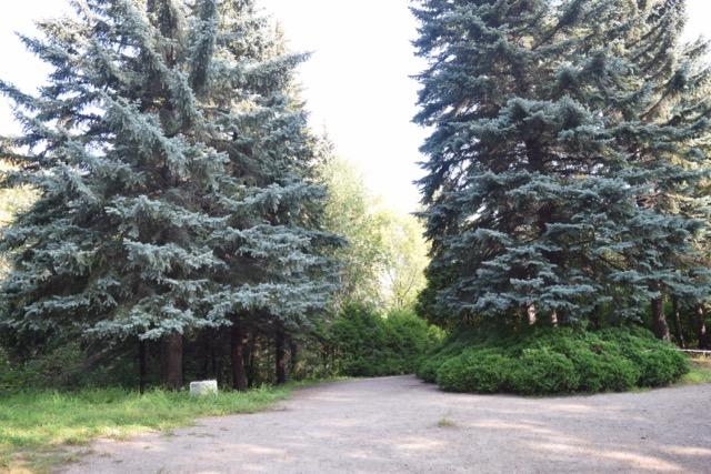 Заповедник в городе – Барнаульский дендрарий